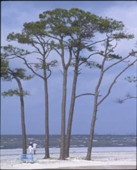 One of the barrier island beaches along the Mississippi Gulf coast.